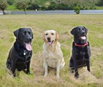 Pet Photography in Cumbria
